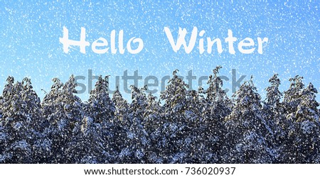 Hello Winter.Winter forest covered with snow.Snowy pine trees in winter forest.Winter concept.Selective focus. #736020937