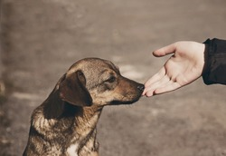 Helping child hand and lonely street dog with sad eyes, theme of social problem of homeless animals