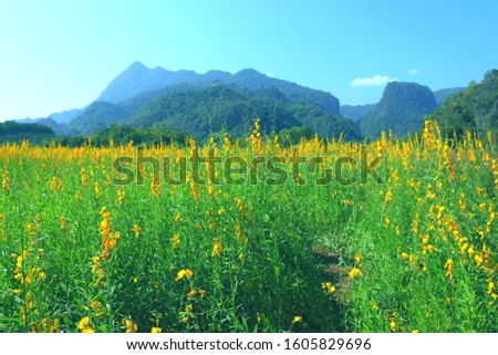 Heme flowers at front of mountain in mae sai District, Chiangrai Province.