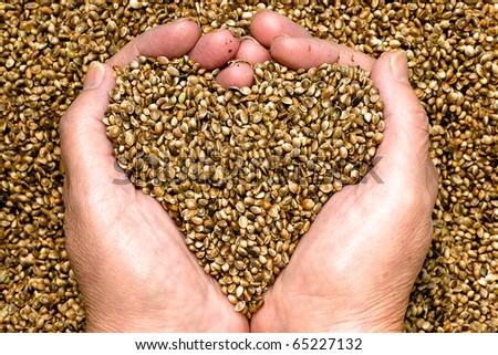 Hemp seeds, held by woman hands, shaping a heart.