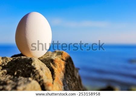 Hen\'s egg on the rocky coast