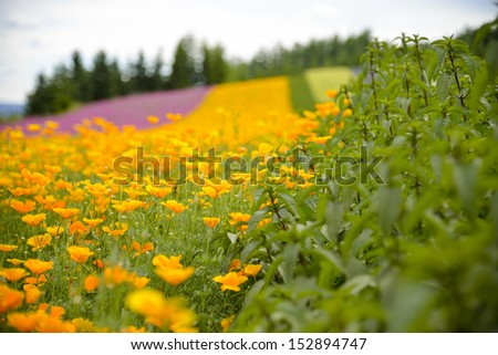 Herb and colurful flower garden