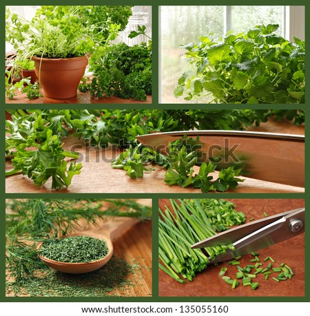 Herb collage includes images of parsley, chives, dill, lemon balm, and a kitchen garden. #135055160