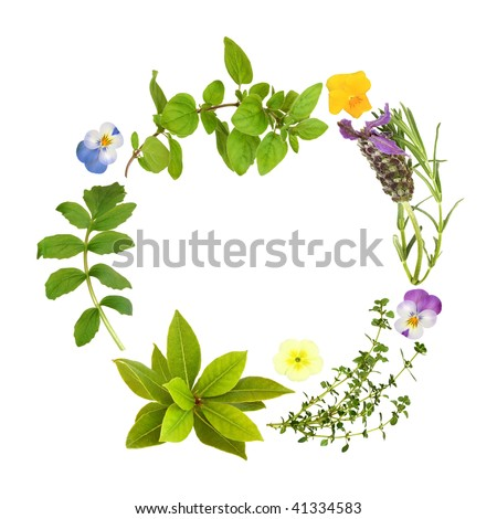 Herb leaf garland of lavender, bay, oregano, lemon thyme and valerian, with primrose and viola flowers, over white background.