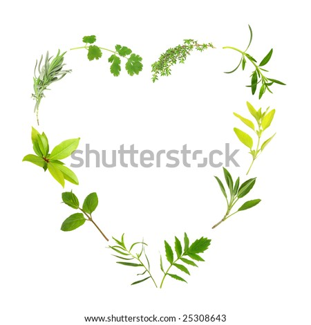 Herb leaf selection forming a heart shape, over white background. Thyme, hyssop, golden marjoram, sage, valerian, (vallium substitute) tarragon, mint, bay, lavender and coriander. - stock photo