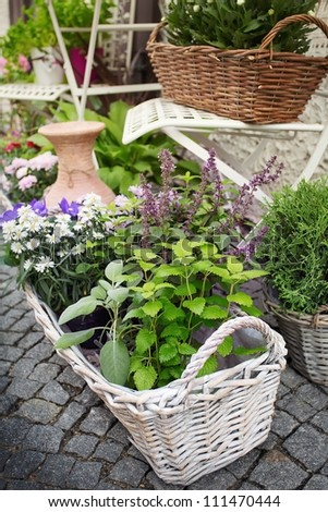 Herb leaf selection in a rustic wooden basket including, rosemary, purple and variegated sage, lemon balm, oregano and flower