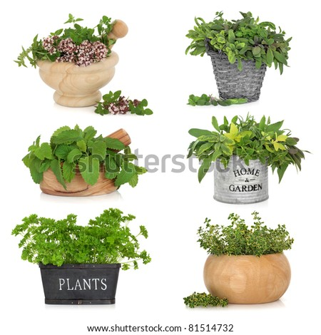 Herb leaf selection in various containers including, thyme, sage, parsley, oregano and lemon balm, isolated over white background.