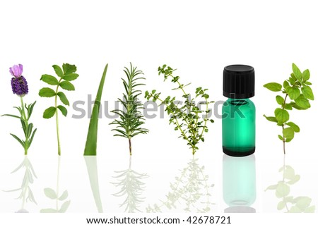 Herb leaf selection of lavender, valerian, aloe vera, rosemary, lemon thyme and marjoram with an aromatherapy essential oil glass dropper bottle, over white background.
