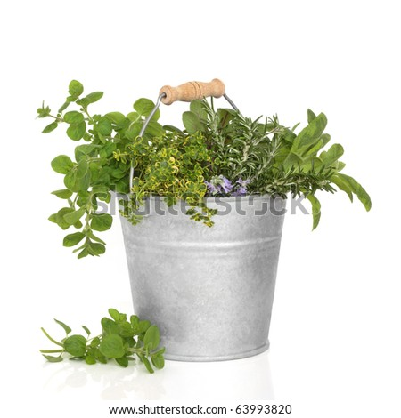 Herb leaf selection of thyme, sage, oregano and rosemary flowers in an old aluminum bucket, isolated over white background.