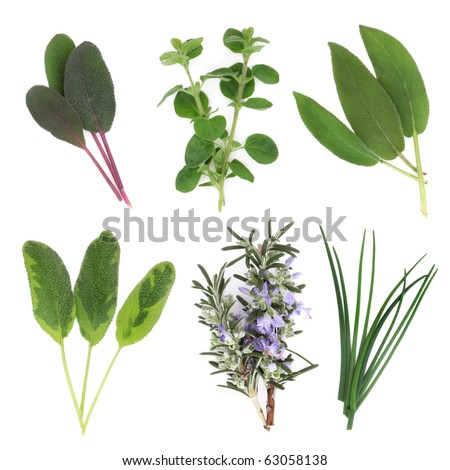 Herb leaf sprigs of sage varieties, chives, oregano and rosemary leaf and flower sprigs, isolated over white background.