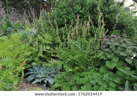 Herbaceous foliage plant border in a shady garden in May 2017 Сток-фото ©