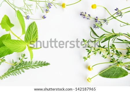 herbal flowers and leaves #142187965