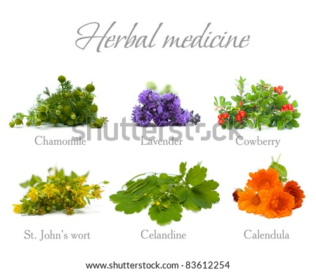 Herbal Medicine: chamomile, lavender, calendula, celandine and St. John's wort isolated