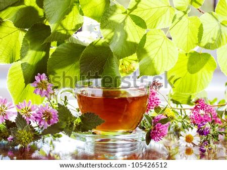 Herbal tea with fresh herbs