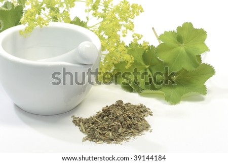 Herbal tea with ladys mantle and mortar on white background - stock photo