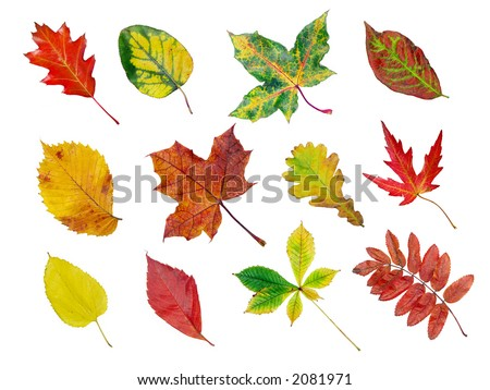 Herbarium of various tree leaves in fall colors - stock photo