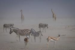 Herbivores in a dust storm