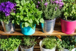 Herbs and flowers in flowerpots on a balcony