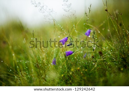 Herbs and Gentian Flowers on an Alpine Meadow in summer