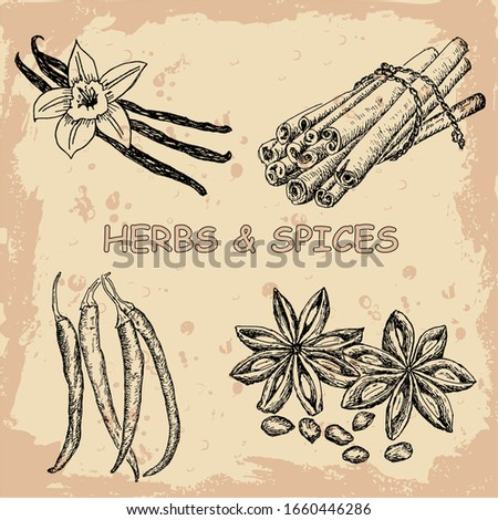 Herbs and spices set. Sketches hand drawn illustration background. Flyer, booklet advertising and design. Line art style.