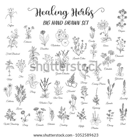 Herbs and Wild Flowers #1052589623