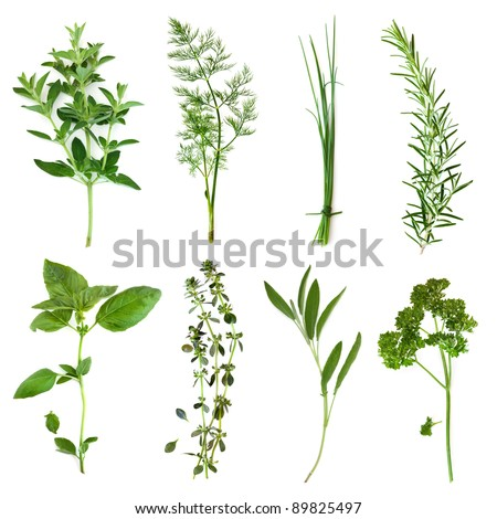 Herbs collection, isolated on white.  Includes oregano, dill, chives, rosemary, basil, thyme, sage and curly parsley.