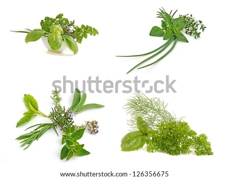 Herbs. Fresh green herbs. Medicinal and culinary herb leaf collection, isolated on white background. Herbs with flower.