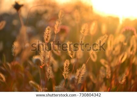 Herbs in autumn sunset