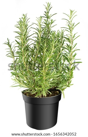 Herbs in black pot separated on white background Stock photo ©