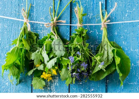 Herbs in bunches (nettle, celandine, Veronica Chamaedrys, plantain) are dried on a rope on a blue wooden background