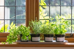 Herbs in plant pots growing on a windowsill