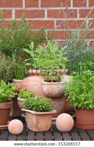 herbs in pots #153268157
