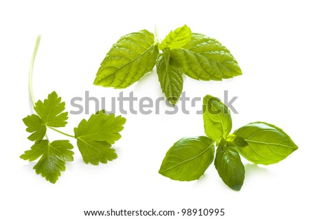 herbs isolated: flat leaved parsley, mint and basil
