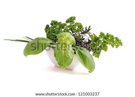 herbs on white background