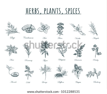 Herbs, plants and spices