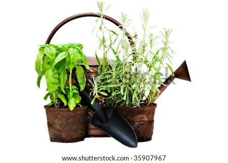 Herbs with watering can and trowel isolated on white background.