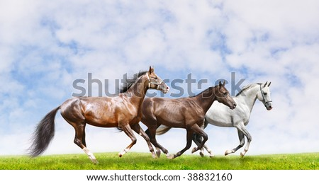 herd galloping in field