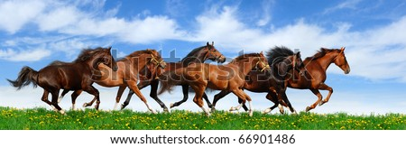 Stock Photo herd gallops in green field