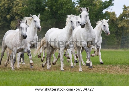 Herd horses running on meadow