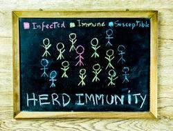 Herd immunity board , in studio Chiangmai Thailand