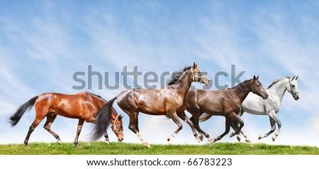 herd in field