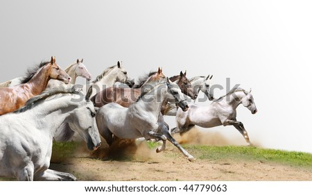 herd isolated on white