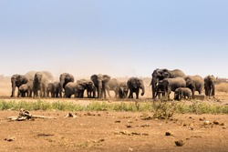 Herd of African Elephants Raising Dust in Savannah, Kruger Park, South Africa, Africa