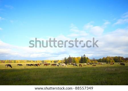 Herd of cows and horses grazing on an autumn meadow