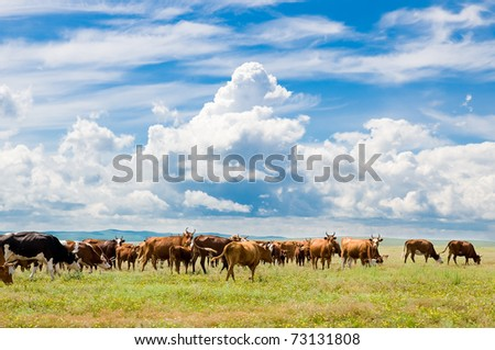 herd of cows grazing at green pasture