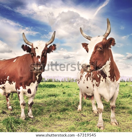 Herd of cows grazing in meadow