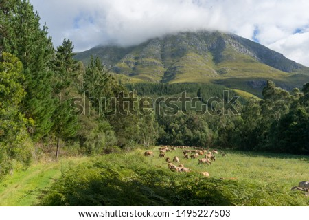 Herd of cows grazing on meadow near the mountain and forest. Ecological farming, organic farming