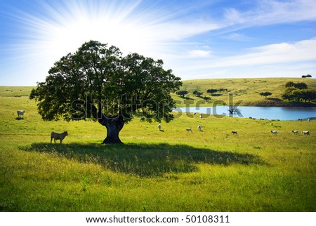 Herd of cows in a farmland with a lake pasturing at sunlight.