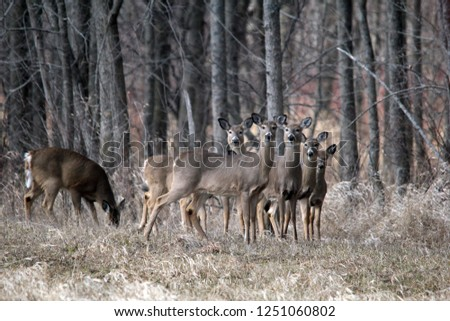 Herd of does in fall