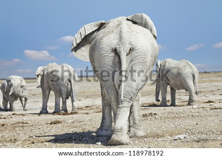 Herd of elephants leaving the scene - stock photo